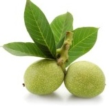 green_walnut